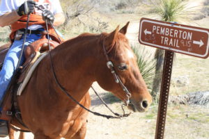horse land,lots, land,horses,zoning,cattle,maricopa county,arizona
